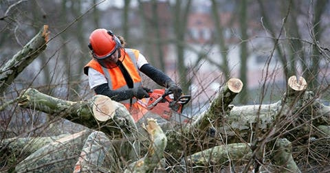 Tree Removal Pearl River | Acadian Tree Removal and Stump Service