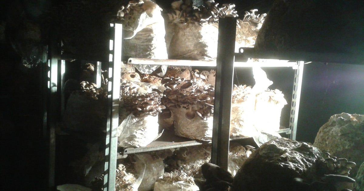 (c) Fungi.at